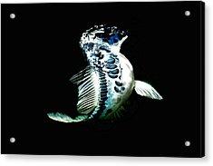 Blue Koi On The Rise Acrylic Print by Don Mann