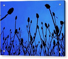 Blue Morning Acrylic Print by Todd Sherlock