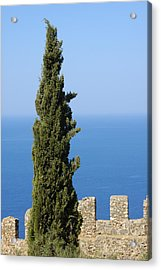 Blue Ocean And Sky Green Tree - Serene And Calming  Acrylic Print by Matthias Hauser