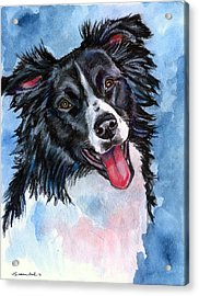 Blue Skies - Border Collie Acrylic Print by Lyn Cook