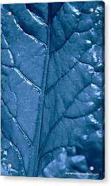 Blue Songs Acrylic Print by Diane montana Jansson