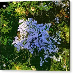 Blue Wild Flowers Acrylic Print by Mindy Newman
