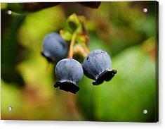 Blueberries Acrylic Print by Beth Akerman