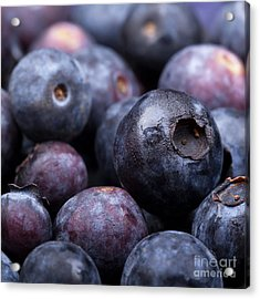 Blueberry Background Acrylic Print by Jane Rix