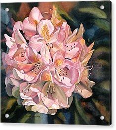 Blushing Pink Rhododendron  Acrylic Print by Sharon Freeman