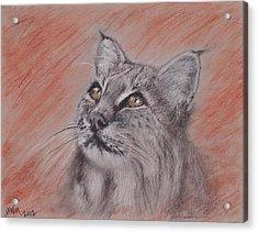 Bobcat Acrylic Print by Michelle Wolff