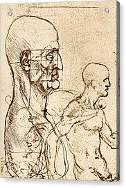 Body Anatomy Acrylic Print by Sheila Terry