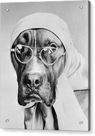 Bohemian Boxer Acrylic Print by Keystone Features