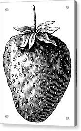 Botany: Strawberry Acrylic Print by Granger