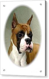 Boxer 1015 Acrylic Print by Larry Matthews
