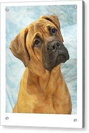 Boxer 169 Acrylic Print by Larry Matthews