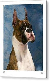 Boxer 456 Acrylic Print by Larry Matthews