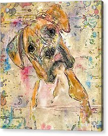 Boxer Babe Acrylic Print by Marilyn Sholin