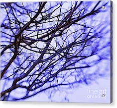 Branches In Winter Acrylic Print by Judi Bagwell