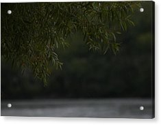 Branches Over Water Acrylic Print by Static Studios