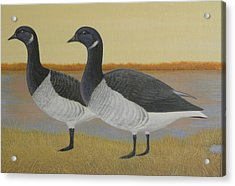 Brant Geese Acrylic Print by Alan Suliber