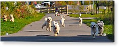 Breeder's Delight Acrylic Print by Lisa  DiFruscio