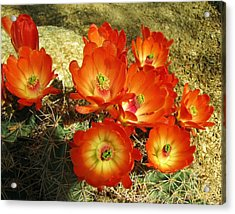 Bright And Beautiful Acrylic Print by FeVa  Fotos