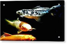 Bright Colored Fish Acrylic Print by Don Mann