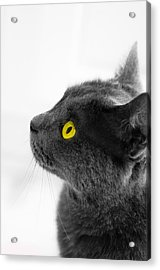 Bright Eyes Acrylic Print by Vincent  Dale