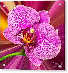 Bright Orchid Acrylic Print by Michael Waters