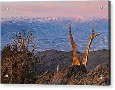 Bristlecone Bishop Sunrise Acrylic Print by Nolan Nitschke