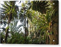 Bromeliad And Tree Ferns  Acrylic Print by Cyril Ruoso