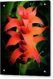Bromeliad Plant Acrylic Print by Heinz G Mielke