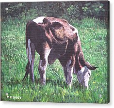 Brown And White Cow Eating Grass Acrylic Print by Martin Davey