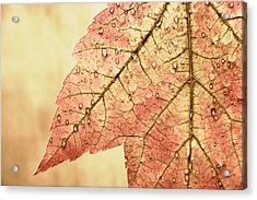 Brown Autumn Acrylic Print by Carol Leigh