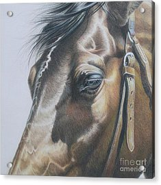 Buckles And Belts In Colored Pencil Acrylic Print by Carrie L Lewis