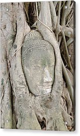 Buddha Head In A Tree Acrylic Print by Kanoksak Detboon