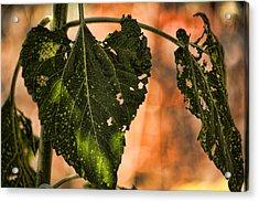 Buggilicious Acrylic Print by Bonnie Bruno