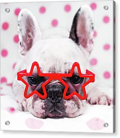 Bulldog With Star Glasses Acrylic Print by Retales Botijero