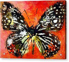 Butterfly 3 Acrylic Print by Yury Malkov