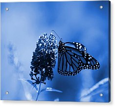 Butterfly In Blue Acrylic Print by Angie Tirado