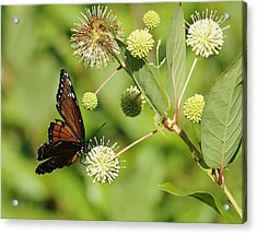 Butterfly Acrylic Print by Keith Lovejoy