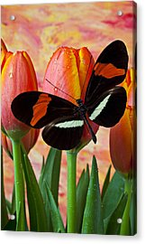 Butterfly On Orange Tulip Acrylic Print by Garry Gay