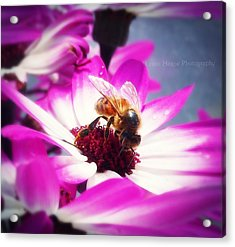 Buzz Wee Bees Ll Acrylic Print by Lessie Heape