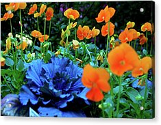 Cabbage And Viola's Acrylic Print by Laura  Grisham