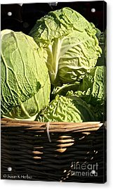 Cabbage Heads Acrylic Print by Susan Herber