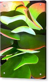 Cactus Wave Acrylic Print by Paul Washington