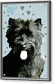 Cairn Terrier Acrylic Print by One Rude Dawg Orcutt