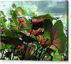 Caladiums In The Rain Acrylic Print by Theresa Willingham