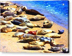 California Sunbathers . Harbor Seals Acrylic Print by Wingsdomain Art and Photography
