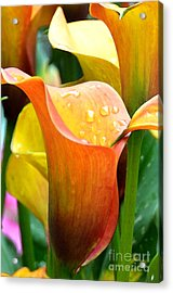 Calla Painting Acrylic Print by Pravine Chester