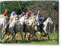 Camargue Cowboys Riding Horses Acrylic Print by Sami Sarkis