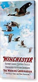 Canada Geese In Flight Acrylic Print by C Everitt Johnson