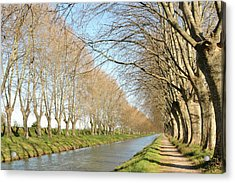 Canal With Tree Acrylic Print by Teocaramel