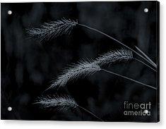 Can't Be Broken Acrylic Print by Kim Henderson